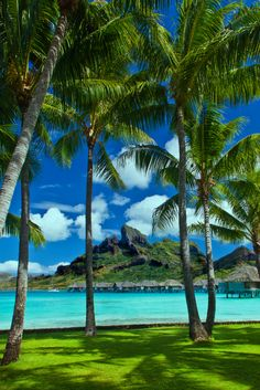 Bora Bora Lagoon with its typical bungalows, surronded by palm trees and mountaints. © A. Papp