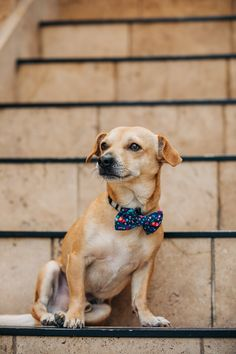 adorable mixed breed sitting on stairs, ©222 Photography | lifestyle dog photography, Huntington Beach