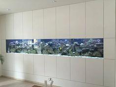 Meerwasser - Aquarium http://www.aquariumwest.de #Meerwasser-Aquarium #Aquariumbau #Aquarium München #Aquarienwartung