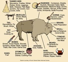 Awesome visual of how Native Americans used all the parts of a buffalo.