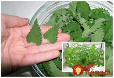 Diy And Crafts, Herbs, Health, Food, Smoothie, Alcohol, Health Care, Essen, Herb