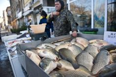 Swedes to Open Fish Factory in Bulgaria