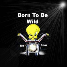 Born to be wild funny quotes quote lol funny quote funny quotes tweety bird looney toons humor