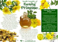 """Evening primrose, a wildflower that grows throughout North America and commonly called, """"The King's Cure-All,"""" seems to have a wide range of healing attributes. This plant gets its name from..."""
