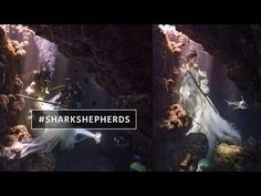 Model Swims with Sharks in Incredible Underwater Photo Shoot