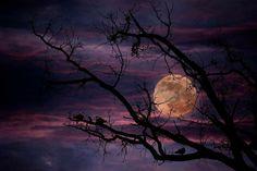 Moon by Cristian Radu Tanta