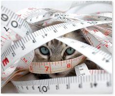 I help you sew...