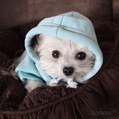 """""""Follow @NorbertTheDog. And welcome to the Norberthood!"""""""