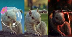 Badass #Squirrel Poses for One of the #Coolest #Photoshop_Battles Ever http://ibeebz.com