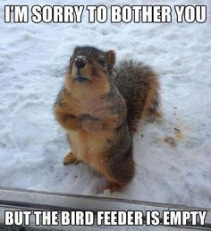 I have a feeling this cute little animal is the reason my bird feeder on the front porch was empty after just a couple days. Lol.