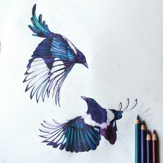 Claudine O' Sullivan - Shop our exclusive range of art prints online. Wide range of art available. Watercolor Sketch, Watercolor Bird, Funny Bird Pictures, Magpie Tattoo, Black Bird Tattoo, Leaf Illustration, Sketch Inspiration, Tattoo Inspiration, Art Prints Online