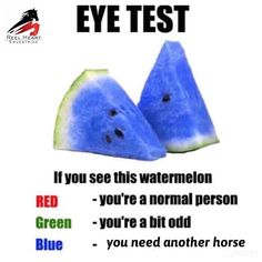 Ok you open house warriors. Time for an eye test - Funny Horse Memes, Funny Horse Pictures, Funny Horses, Cute Horses, Horse Love, Horse Humor, Hilarious Memes, Stupid Funny, Equestrian Memes