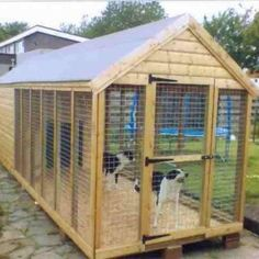 dog run connected to shed - I WILL TAKE TWO; ONE FOR THE DOGS ONE FOR MY FUTURE CHICKENS ;-)
