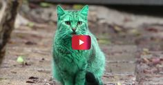 This green cat is confusing the hell out of a Bulgarian town | Rare