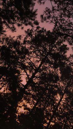 Aesthetic Wallpaper Black Wallpaper Colorful Wallpaper Flower Wallpaper Iphone Wal Iphone Backgrounds Nature Nature Iphone Wallpaper Aesthetic Iphone Wallpaper