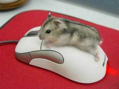 It should be a mouse on the mouse,not a hamster. Oh well, still rodents