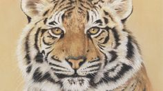 Tiger Portrait [Video Course] | How to Draw a Tiger Portrait with just 6 Pastel Pencils. Video Course.