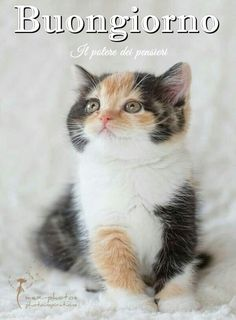 Kittens, Kitty Cats, Good Morning, Puppies, Cute, Babys, Sayings, Funny Kittens, Days Of Week