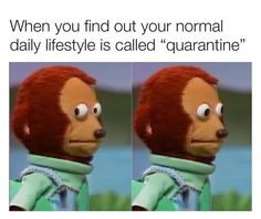 "75 Introvert Memes - ""When you find out your normal daily lifestyle is called 'quarantine'."" 75 Introvert Memes - ""When you find out your normal daily lifestyle is called 'quarantine'. All Meme, Stupid Funny Memes, Funny Relatable Memes, The Funny, Funny Stuff, Funny Gifs, Fuuny Memes, Funny Videos, Funny Things"