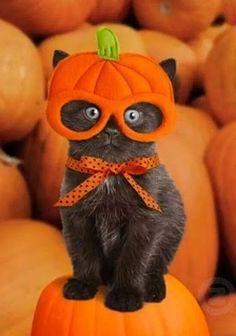 Pumpkin Bumpkin~♛