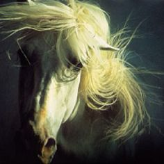 First retrospective by Robert Vavra, horse photographer nonpareil, to open Saturday Horse Mane, Horse Head, Equine Photography, Animal Photography, Kentucky Horse Park, Picasso Paintings, Unicorn Art, Museum Exhibition, Beautiful Horses