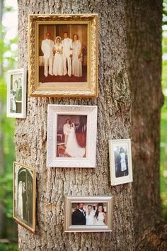 The family tree, Cool idea for outdoor weddings.