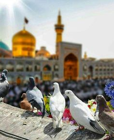 Islamic Images, Islamic Pictures, Dove Pictures, Nature Pictures, Muharram Pictures, 10 Muharram, Karbala Pictures, Muharram Wallpaper