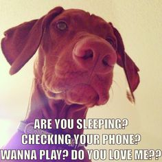 Pinterest Humor Dogs   answer without thinking much # dog # humor repinned from dogs by des