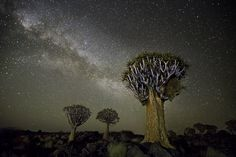 http://www.bethmoon.com/DN06.html  In this photographic project, Beth Moon captured the beauty of the stars along with gorgeous African trees. She took the pictures in Botswana during nightless moons, using only the light from the stars.