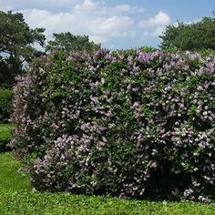 11 Living Fences That Look Better Than Chain Link Natural fences constructed of shrubbery, trees, or Country Fences, Rustic Fence, Backyard Fences, Garden Fencing, Pool Fence, Fence Design, Garden Design, Privacy Landscaping, Landscaping Ideas