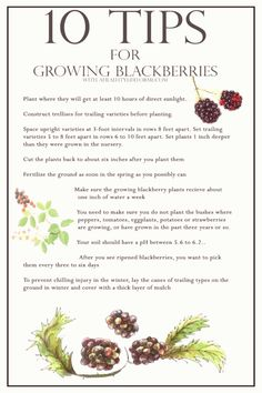 Tips For Gardening 10 Tips for growing blackberries ~~ do we really need help growing these here in WA? I have TONS now. :) - 10 Tips For Growing Blackberries