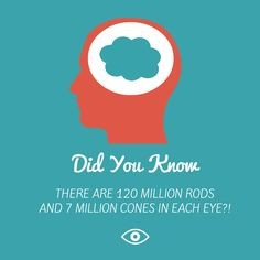 #DidYouKnow how many rods and cones were in EACH eye? #EyeFacts