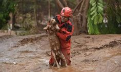 Dramatic Photos Show Dog Saved From Devastating Mudslide