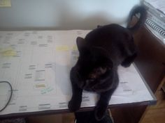 my cat is a databse designer guru