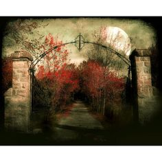 Le chemin St. Louis, spooky,crimson red foliage, stone gate, full... (€18) ❤ liked on Polyvore featuring home, home decor, halloween, backgrounds, tubes, halloween home decor, stone home decor and leaf home decor