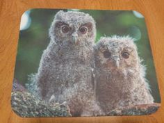 FREE shipping!  Perfect for home or office!  Owl Mouse Pad - Watchful Babies  $8.99