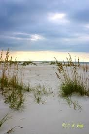 Beach grass. I don't even have to be at the ocean to see this. We have it right here on Lake Michigan :)