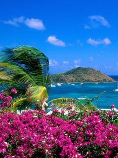 Bougainvillea in St Martin