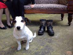 Il cane e le scarpe
