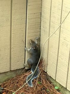 How To Get Rid Of Squirrels With Herbs Comment Please
