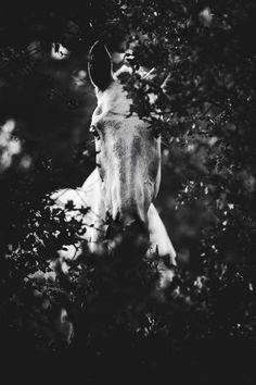 Photos: Horses in Nature I Anna Ibelshäuser - Photos: Horses in Nature I Anna Ibelshäuser - Amazing Animals, Most Beautiful Animals, Beautiful Horses, Beautiful Creatures, Cute Animals, Cute Horses, Horse Love, Arte Equina, Horse Background