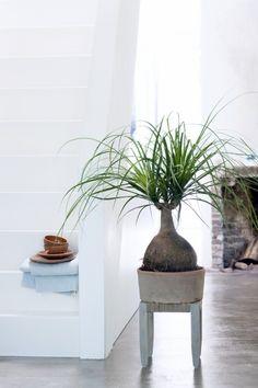 Groen wonen | Kamerboom vervangt kerstboom • Stijlvol Styling - WoonblogStijlvol Styling – Woonblog