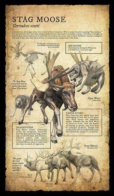 Natural History Museum Signage | Part II on RISD Portfolios | illustration for Pleistocene epoch (Ice Age) by Beth Zaiken