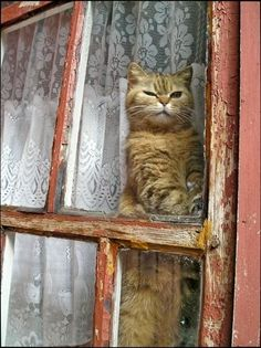 1000+ images about Cats behind Fences - Doors - Windows on Pinterest