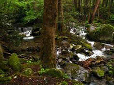 There is adventure to be had in the Great Smoky Mountains! Come visit Sevierville, TN!  Photo: Jim R Rogers