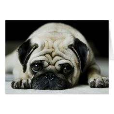 Precious Pug Dog Greeting Card