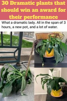 If you've ever owned a house plant, you'll know that they can get a little 'dramatic' at times.  If you forget to water them just once, they'll start to sag and weep and wilt, looking like they're knocking at death's door, but as soon as you give them a few little drops, they're suddenly fine again! Annorexia Tips, Love Tips, Health And Wellness, Health Tips, Health Fitness, Flower Aesthetic, Fashion Videos, Crush Quotes, Fourth Of July