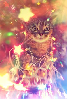New Year! by Svetlana R )sТь, via Christmas Kitten, Christmas Animals, Crazy Cat Lady, Crazy Cats, I Love Cats, Cool Cats, Pet Costumes, Here Kitty Kitty, Cute Animal Pictures