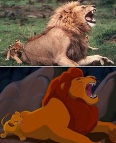 Lion King in real life : pics