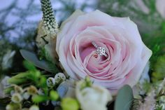 Beautiful pink romantic rose from bridal bouquet - Sonning flowers classic romance. Beautiful Pink Roses, Romantic Roses, Real Weddings, Summer Weddings, Wedding Events, Bouquet, Bridal, Flowers, Plants